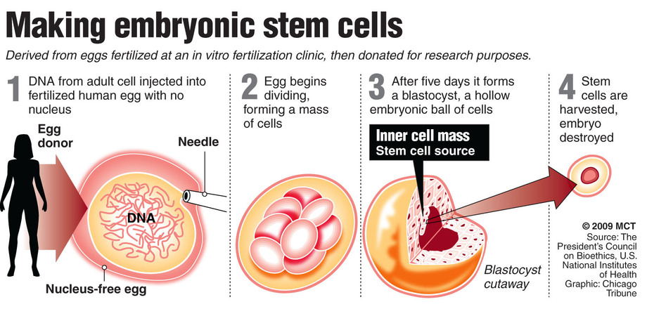 Stem Cell Research | Behind the Truth